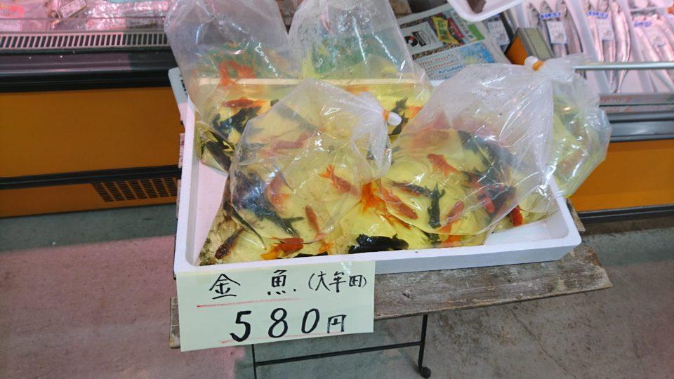 おさかな天国 金魚