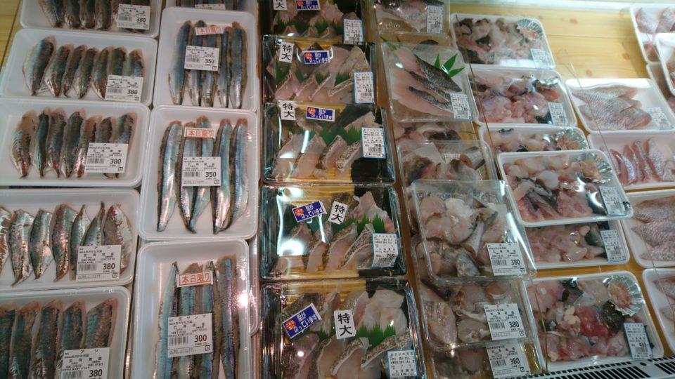 おさかな天国 魚