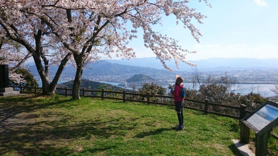 毘沙門山 桜