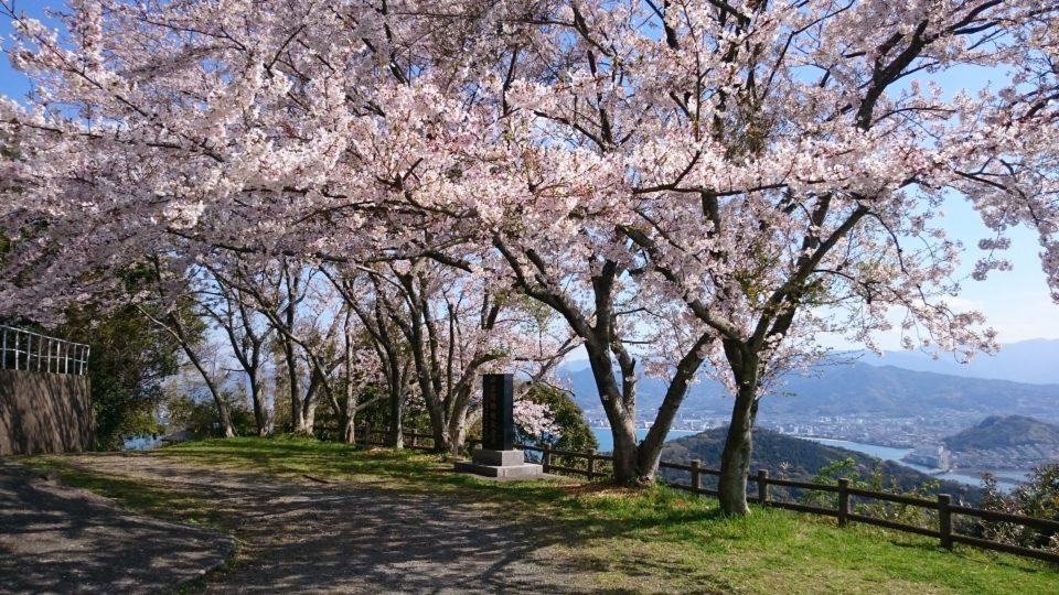 毘沙門 山頂 桜