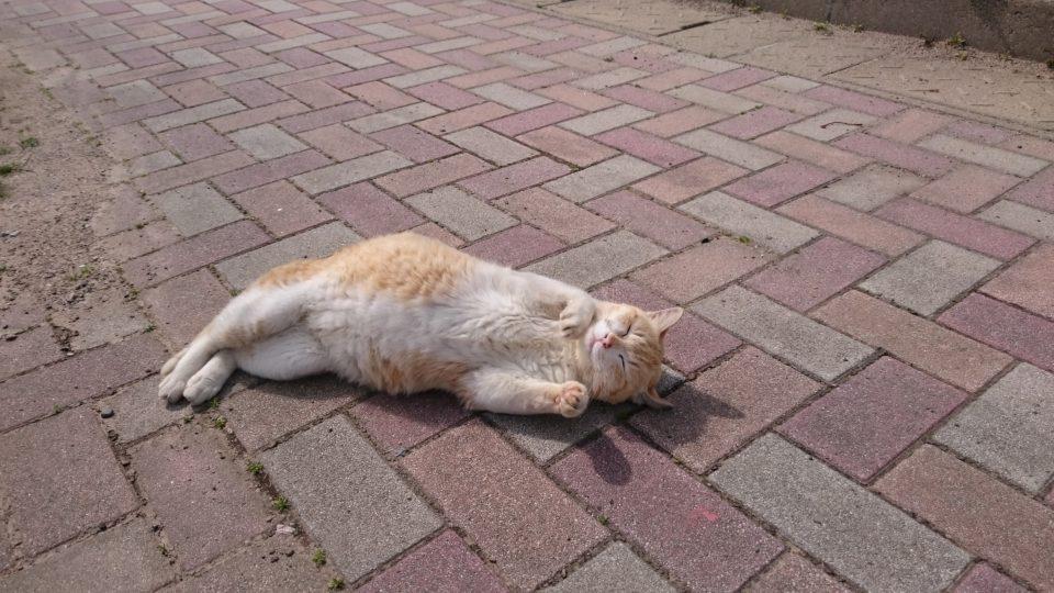 姫島の猫1