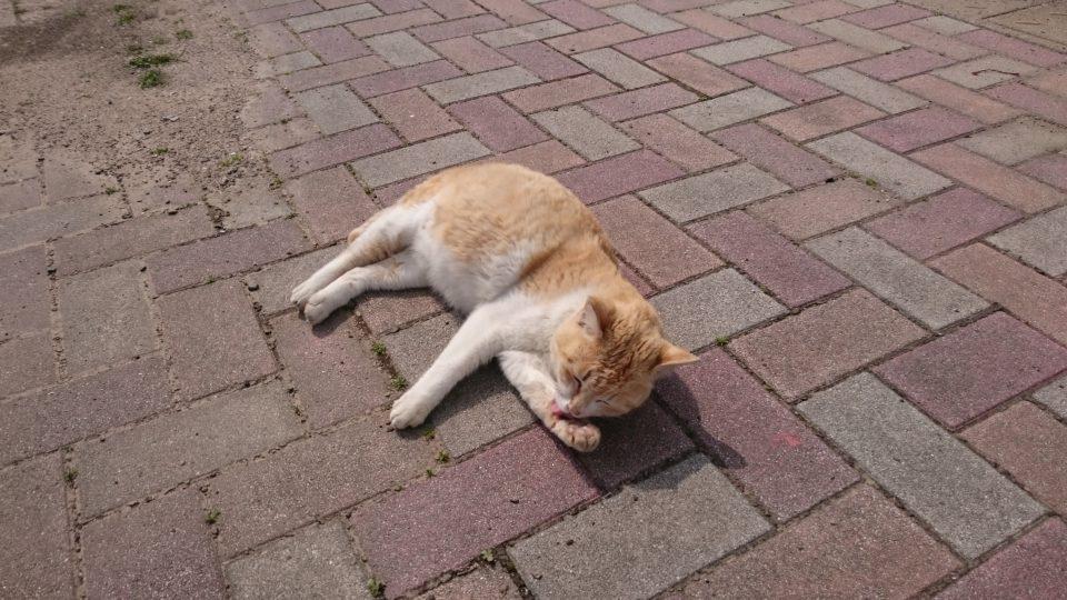 姫島の猫2