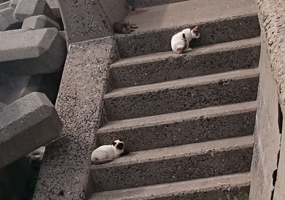 姫島の海にいる猫
