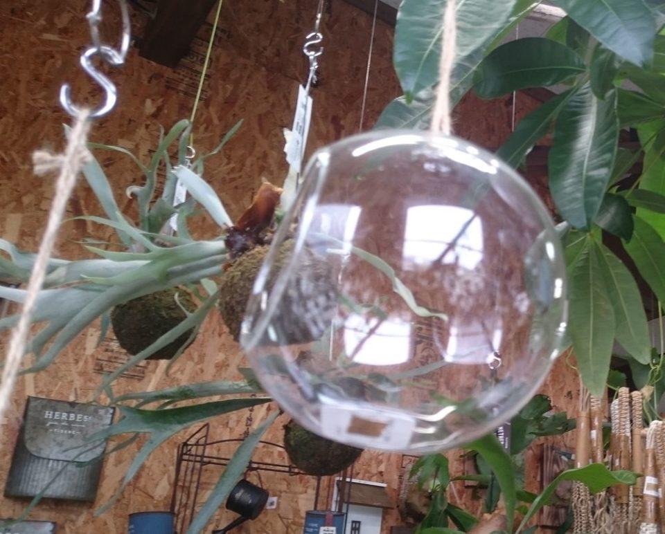 cocoha(ココハ)エアープランツの飾り方