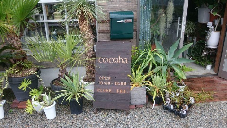 cocoha(ココハ)入口