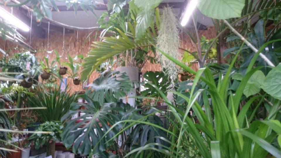 店内はジャングルの様です