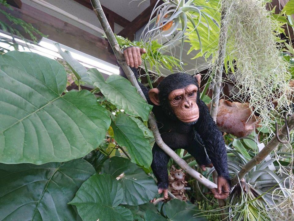 cocoha(ココハ)お猿さん