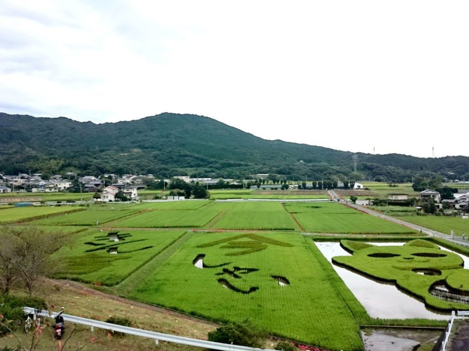 今宿田んぼアートフェスタ 2014
