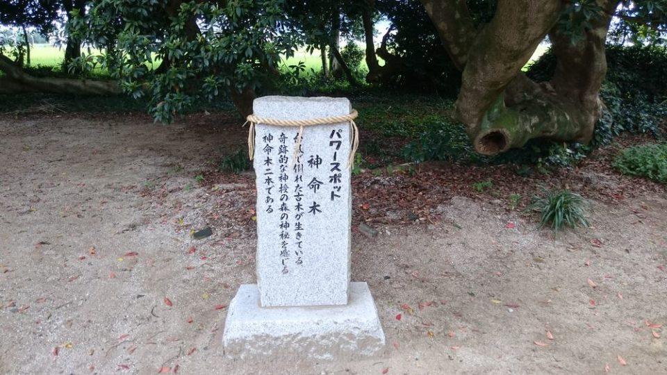 志登神社 パワースポット 神命木