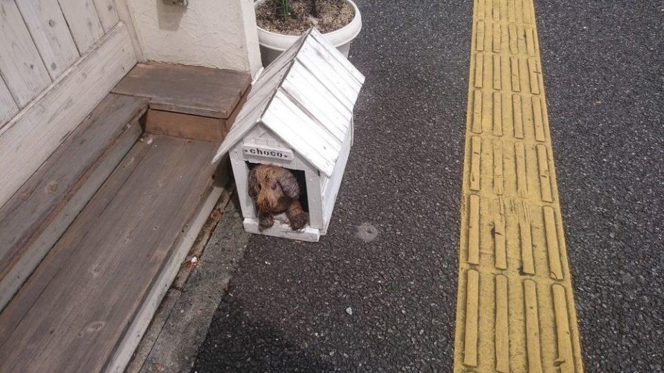 てつおじさんのチーズケーキ福岡次郎丸本店 看板犬choco