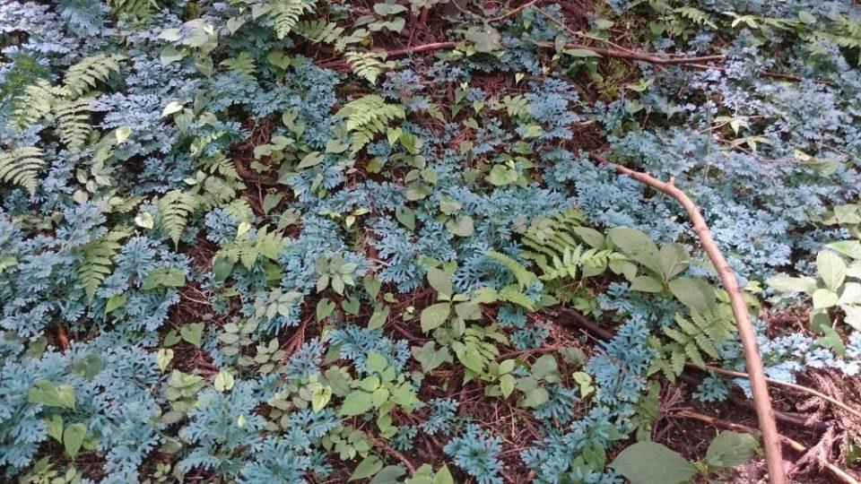 不動滝 青い草