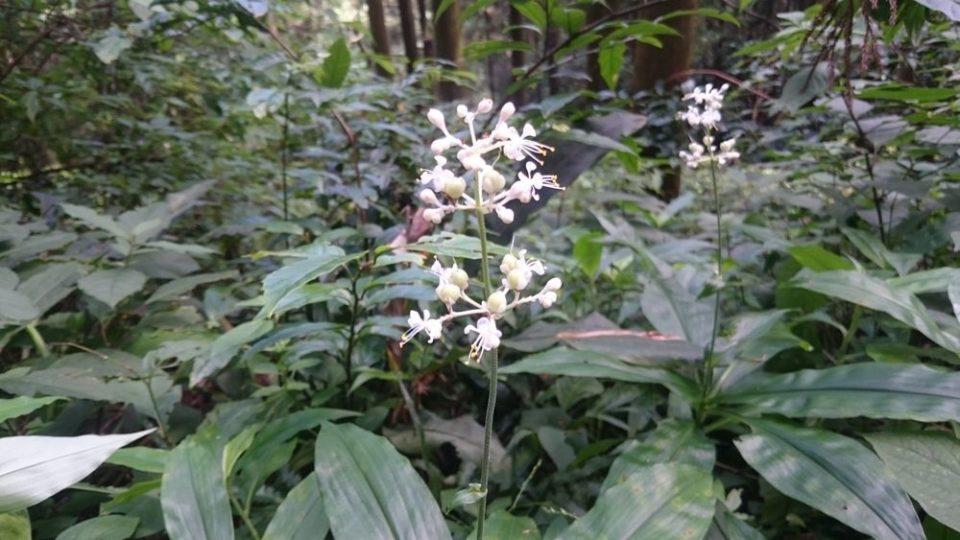 不動滝 途中で見つけた花