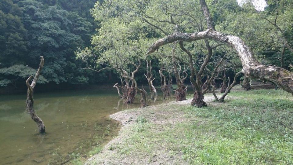 不動池 糸島 景色