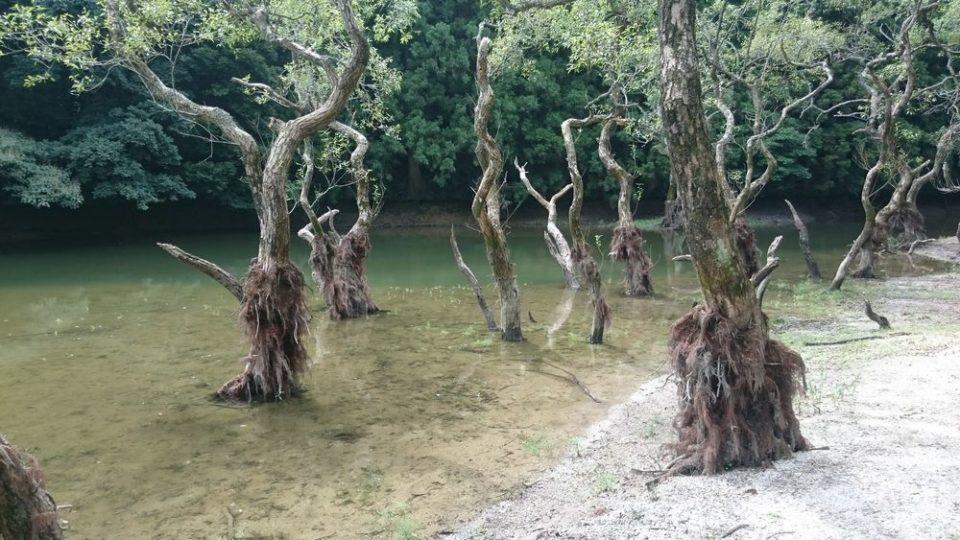 不動池 糸島 木がね