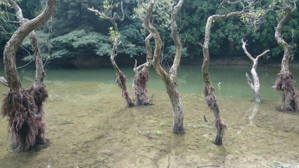 不動池 糸島 木が多い