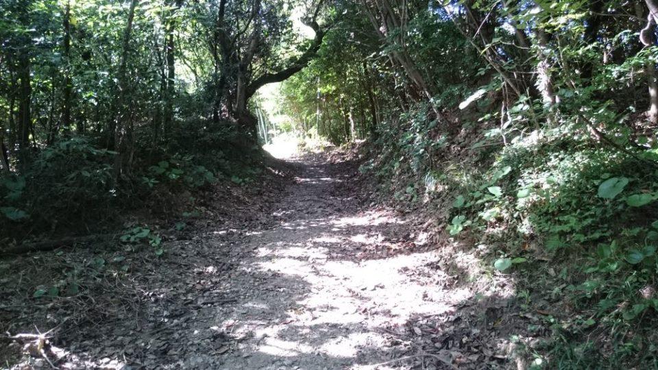 火山 上り道