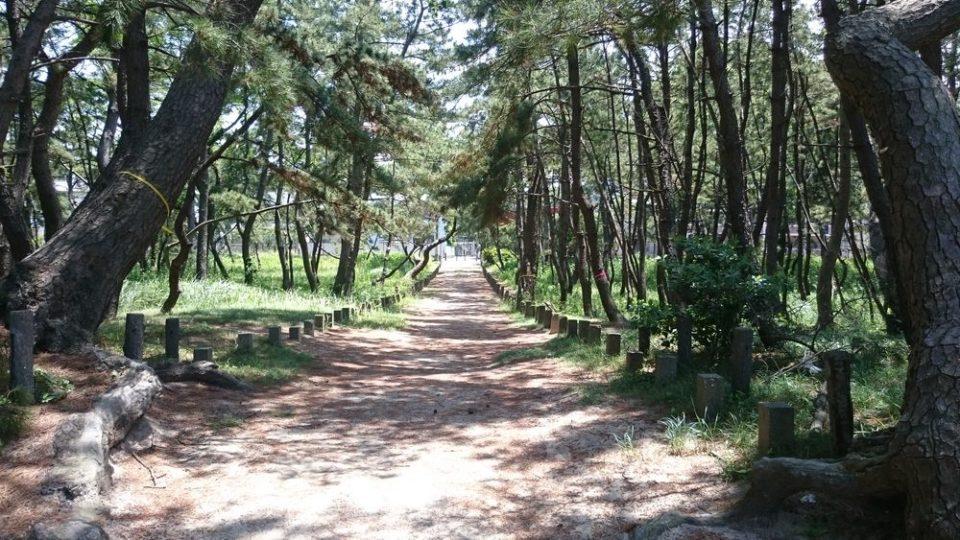 生の松原 壱岐神社までの道