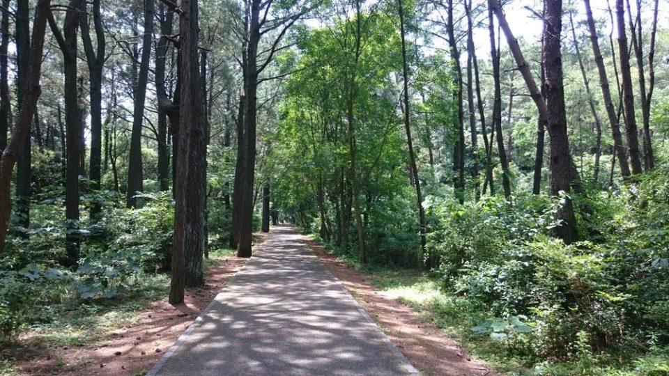 生の松原森林公園内