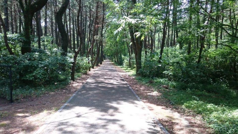 生の松原 森を散歩