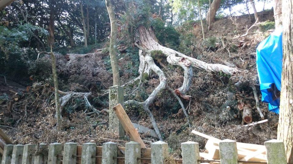 糸島 宇美八幡宮 御神木が倒木
