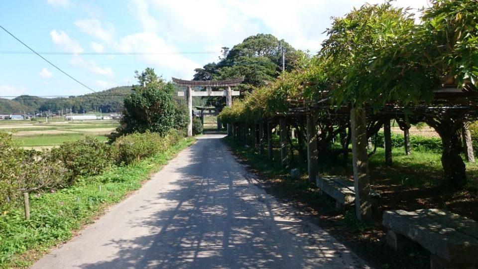 糸島 宇美八幡宮 一の鳥居方向と藤棚