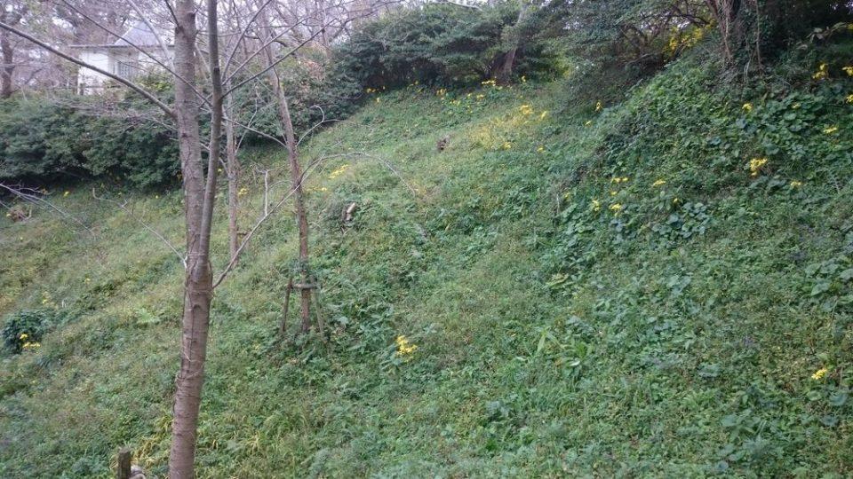 加布里公園 黄色い花