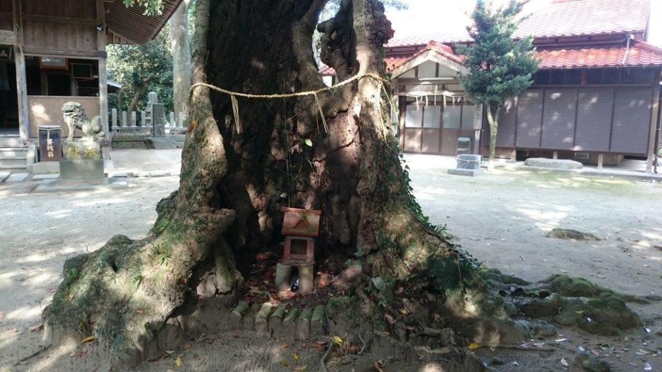 雉琴神社 大木の中の祠