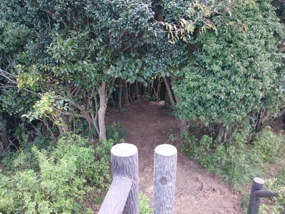 トトロの森 入口