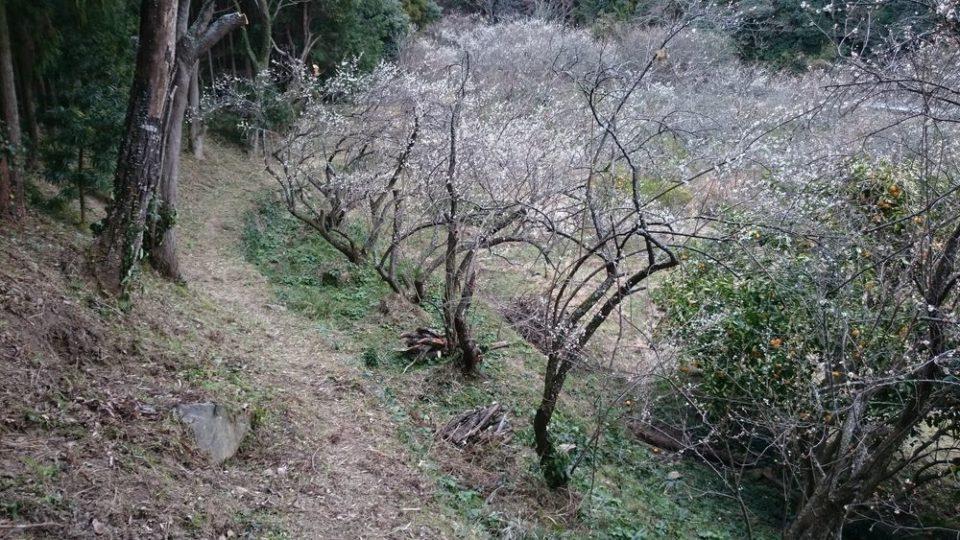 小富士梅林 糸島 ここから梅を見る