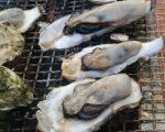 糸島市福吉漁港の牡蠣小屋情報 空港や博多駅から電車1本 みんなでお酒を飲めます。送迎付きの温泉あり
